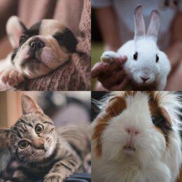 RAWGANIC Tiere